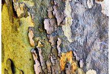 mousse, lichen, écorce