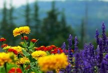 Flowers  / by Jeni Lamberto