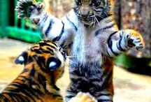 Agababy Juggler Pinterest / This is about Nature  Animals Cars and much more