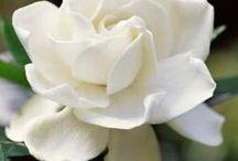 A White Garden