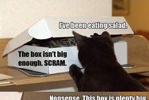 Cats / So many cute, silly and funny cats. I looooove cats. meow :3