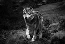 Wildlife-Nature