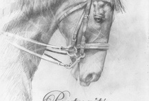 Sport Portraiture / Equine Pencil