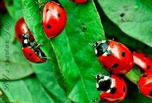 lovely ladybirds
