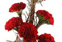 Extravagant Flowers / #Extravagant #Plush #Posh #Modern