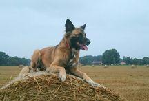 Emmi und Ideen für Hunde