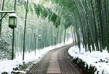 Path/ Road