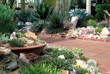Jardim Desértico
