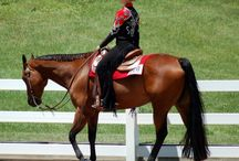 Horses / by Heidi Bradshaw