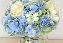 modra svadba