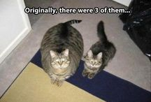 Cats in reality