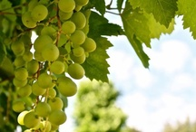 ✔GRAPES ✿♥‿♥✿ / No gripes about grapes ♥  ♥  ♥  ♥  / by S♥lly✿♥‿♥✿♎★☮✌♥