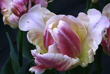 Garden - spring / by Jenny-Anne Hugosson