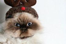 """christmas lol""""s"""