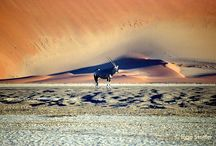 Namibia / #Namibia ~Endless horizons, the oldest desert and highest dunes in the world, second lowest population density, the largest meteor and the most numerous cheetah on earth.