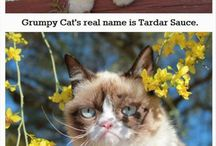 Tardar Sauce's birthday is tomorrow. It is April 3, 2015. / HAPPY THIRD B-DAY, GRUMPY CAT!!!