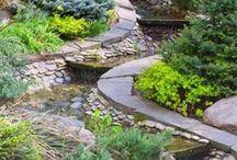 Pflanzen für steingarten.