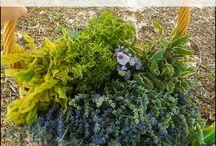 Medicinal herbal garden