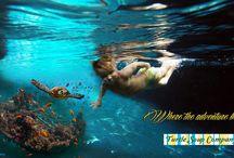 More Turtle Soup! - www.turtlesoupcompany.com