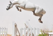 Horse high jumping