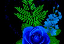 bunga unik