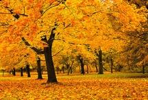drzewa / widoki przepięknych drzew -okazów