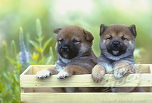 Doggy!!!
