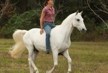 Natural Horsemanship I Love
