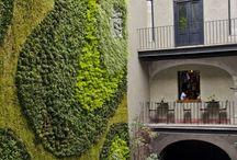 zielone ściany na zewnątrz / outdoors green walls / inspiracje