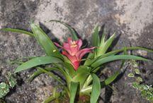 Kokemas by Laforesta / Flores y plantas colgantes dentro de una maceta natural