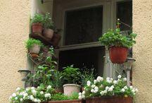 Puutarhaideoita Berliinistä / Berliinin pienet parvekkeet, kukkiva katutaso ja vihertävät katot - Green Berlin