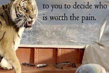 Tygrysy jako kat. zwierząt
