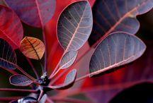 szép fotók, növények