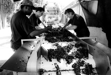 Wine Experience / Let us show you the magic word of wine...