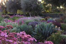 lawn and garden / by Tina Crookshank