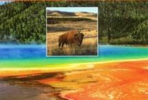 Yellowstone Books & Montana Fav's! / by West Yellowstone Montana Chamber & Visitor Center