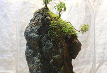 terrarium, succulent and plants