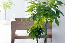 Gardening : Indoors