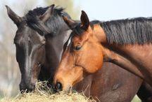 Tipps rund um Pferd und Reiter