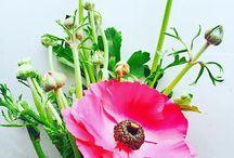 Pretty & Pink Flowers