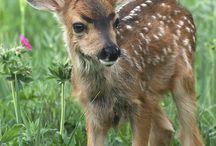 Awhhhh....Deer......