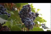 Wine / Címkés, szöveges, mindentbeletábla