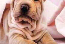 Doggies!♥