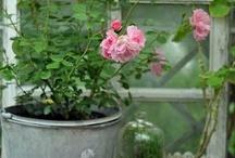 Růže / Růže (roses)