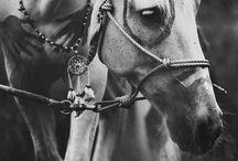 Shoot paarden