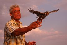 BRINZAL / Brinzal is a non-profit association founded in 1986,  which is dedicated to the study, conservation and rehabilitation of nocturnal birds of prey.