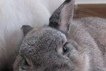 hares/rabbits