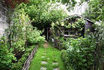 Garden - Wattle Love / by Sara Holida Gleason