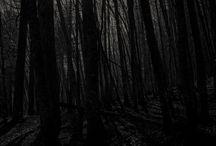 Forest II / Portfolio