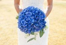 Wedding: Black, white, hydrangea blue for Stef